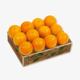 florida-navel-oranges
