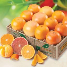 fruit-chorus