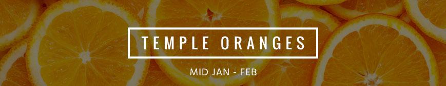 temple-oranges-banner